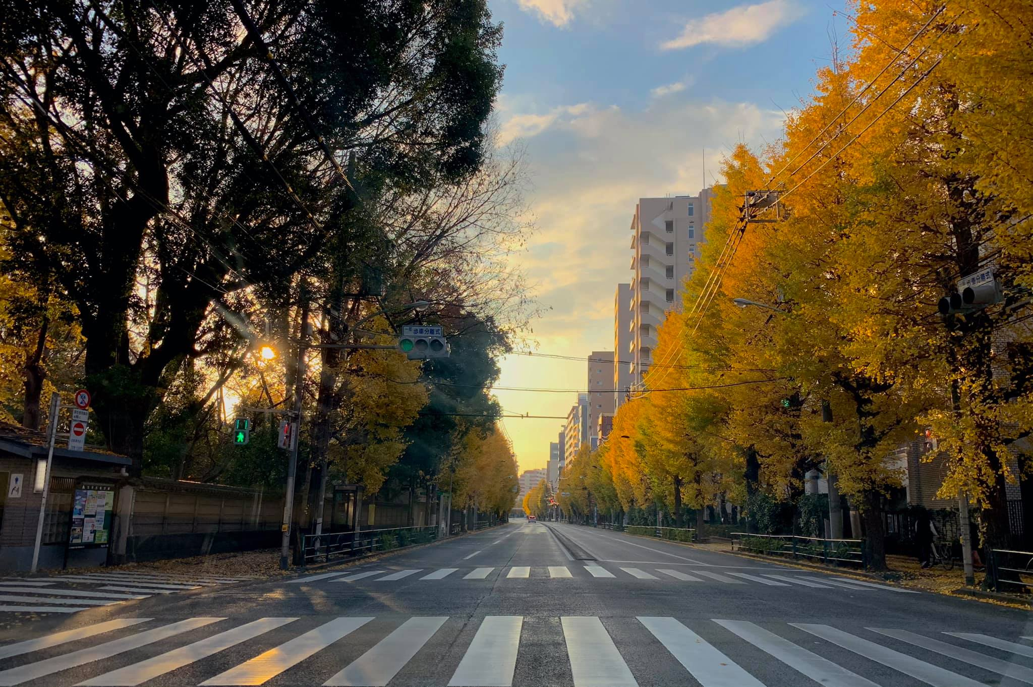 本郷通りの朝 イチョウ紅葉